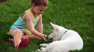 devojcica i pas bez noge petface7