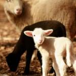 DA LI ZNATE: Kakvo značenje imaju najčešći Uskršnji simboli?