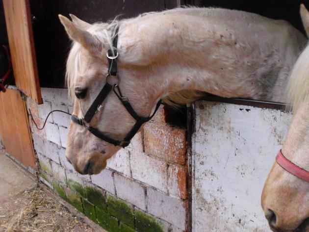 konji hipodrom petface