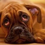 OTKRIVAMO: Ko to mrzi kućne ljubimce?!