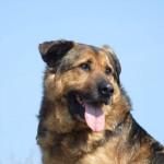 NOVI SAD: Lesi je slepi pas, koji danas prvi put trči! (VIDEO)