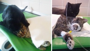 Upoznajte Radameneza: Mačka koji je jedva preživeo, danas leči druge životinje! (FOTO)
