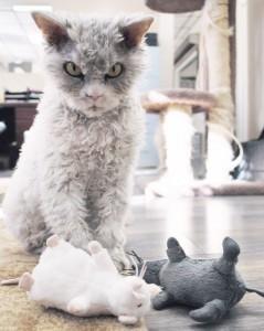 """""""Grumpy cat"""" pazi se: Stigao je Mrzovoljni Albert! (FOTO)"""