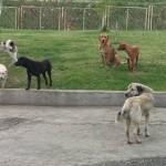 """BESNI LJUBITELJI PASA U VRANJU: Pokrenuta akcija """"Tražimo """"najopasnijeg"""" uličnog psa""""!"""