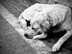 napusteni psi petface
