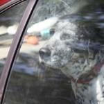 Policijac kaznio ženu koja je zaključala je psa u automobil – tako što je NJU zaključao u automobil!