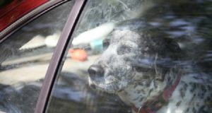 psa u automobil petface