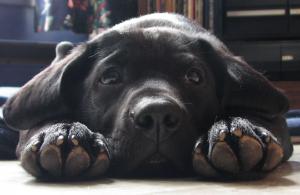 nokti psa petface