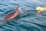 pas i delfin petface
