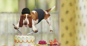 pas i torta petface