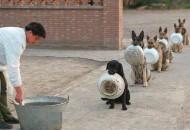 policijski psi cekaju hranu petface