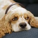 Neprijatno i bolno stanje psa u kojem mu VI morate pomoći!