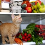REZULTATI ISTRAŽIVANJA: Ukus kod pasa i mačaka jači nego kod ljudi!