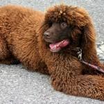 Psi koji se ne linjaju – mit ili stvarnost?
