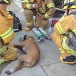 NISU OKLEVALI: Spasili psa iz požara, a onda postali najbolji prijatelji! (VIDEO)