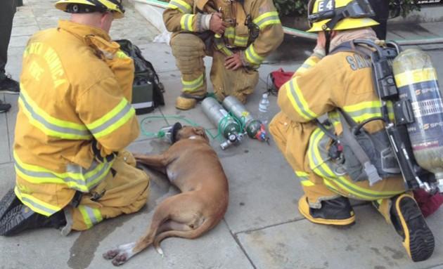 spasili psa iz pozara petface