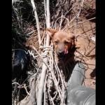 VALJEVO: Darko spasio štene, vezano kanapom oko vrata! (VIDEO)