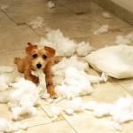 13 razloga zbog kojih vas štenci dovode do ludila!