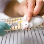 VELIKO BRAVO: I Novi Zeland zabranio testiranje kozmetičkih proizvoda na životinjama!