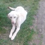 Spasila je život psu Lani, koju su vezali pertlom od patike oko vrata. Ovo je NJENA poruka!