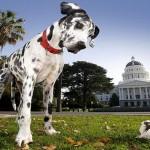 Da li su vlasnici velikih pasa diskriminisani?