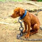 POBEDA: Zabrana vezivanja kućnih ljubimaca teškim lancima!