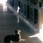 SRCE DA PREPUKNE: Pas svakog dana posećuje mesto gde je sahranjen njegov vlasnik!