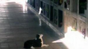 pas posecuje grob svog vlasnika