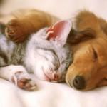 Pas i mačka u zajedničkom domu