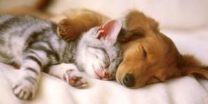 pas i macka petface
