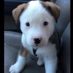 PRESLATKO: Pogledajte kako se ovaj slatkiš bori protiv štucanja! (VIDEO)