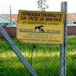 ŠTA SE KRIJE U RUMI: Nisu dopustili Udruženjima da posete pse I mace u azilu!