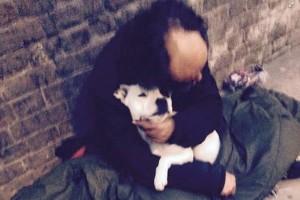 beskucnik i pas petface