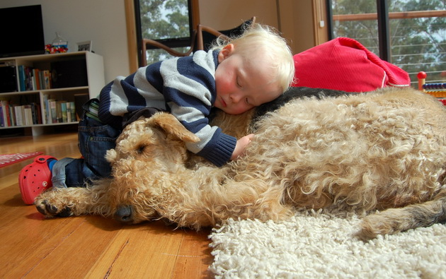 pas i stres petface