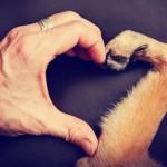 NOVO ISTRAŽIVANJE: Da li ljudi mogu da usreće svoje ljubimce?
