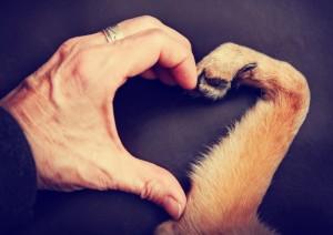 psi i ljudi petface