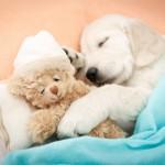 Poželite dobrodošlicu svom novom članu porodice – štenetu!