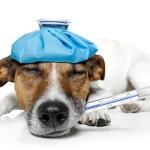 Šta se dešava ukoliko vaš pas proguta sadržaj ampule?