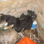 MIHAJLOVAC: Dečica brinu o 5 štenaca koje je kuja ostavila!