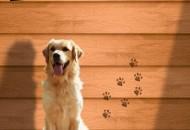 kucice za pse petface