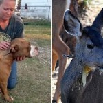 UŽAS: Nadležni dopuštaju lov na životinje lukom i strelom?!