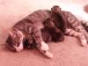 macak usvojila macice petface