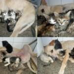 PRAVA LJUBAV: Pas spasio šest mačića iz smeća!