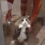 """""""Imam nevaljalu macu, kako da je okupam?"""""""