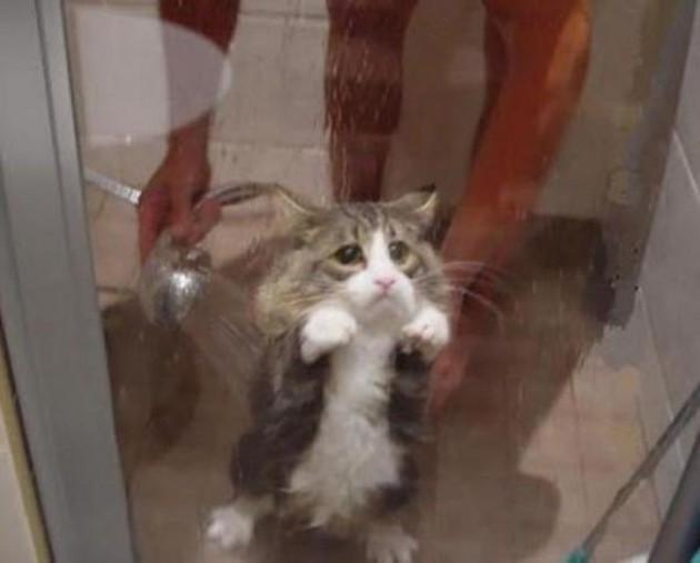 macke mrze kupanje petface