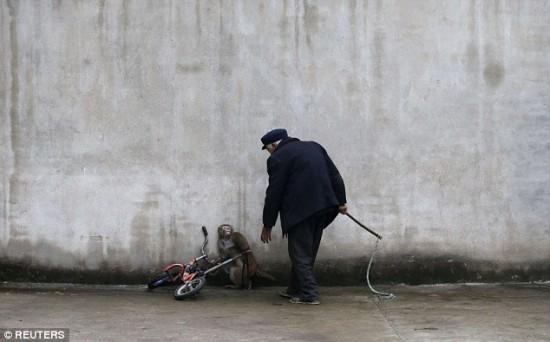 majmuni-u-cirkusima-petface