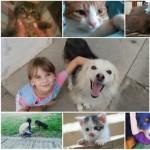 BRAVO: Za samo mesec dana VI ste donirali preko 150 kg hrane za napuštene pse i mace!