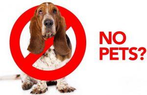 no pet friendly petface