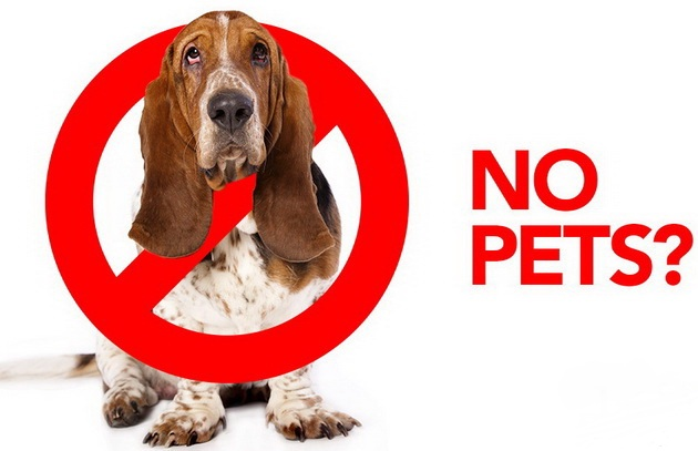 no pet friendly petface