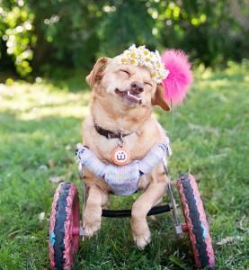 pas sa invaliditetom petface